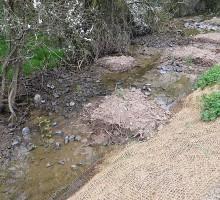 Seltenbach in Ebertsheim: Sohlanhebung und Einbau von Schilfrhizomen